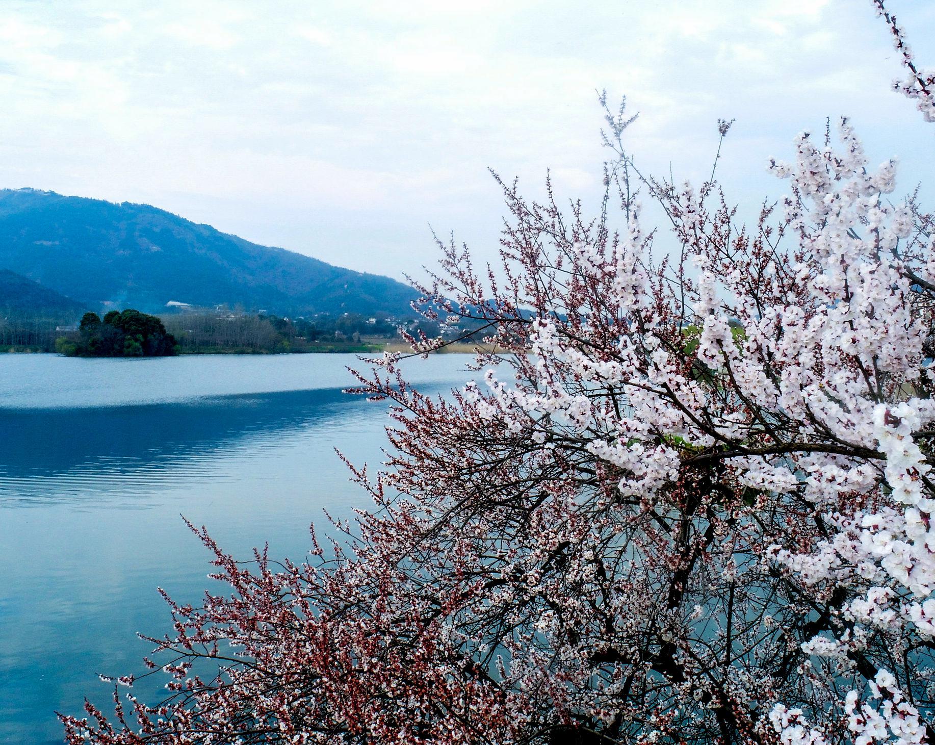 安徽庐江:花开迎春季 美景入画来