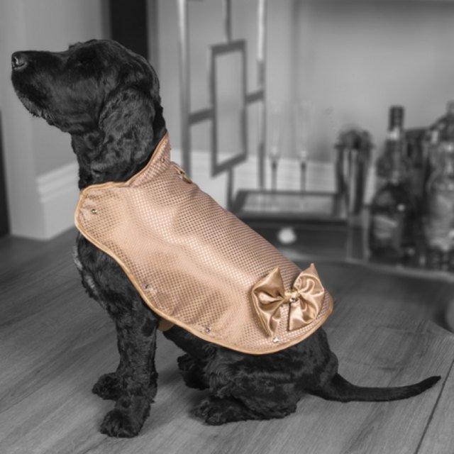 人不如狗!这件狗夹克价值86万 纯金镶钻镶钻石