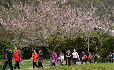 阳春三月百花开 张家界黄龙洞景区春光醉游人