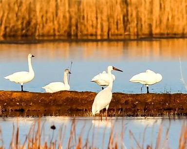 七部门将全面排查国家级和省级自然保护区环境问题