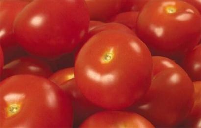可以治疗十种常见疾病的西红柿