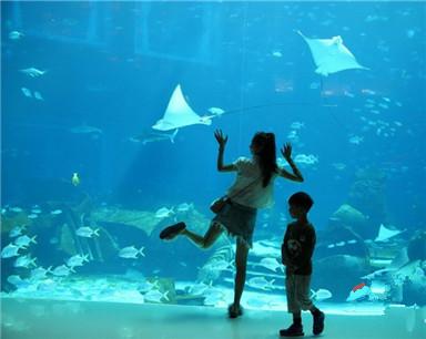 三亚·亚特兰蒂斯酒店即将试营业 游客驻足观赏海洋生物