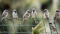 陕西有367种野生保护动物 捕杀麻雀也涉嫌违法
