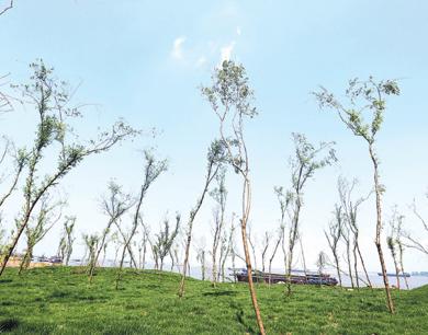 彭泽县:绿草如茵的岸线(图)