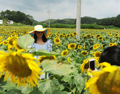 定南:向日葵花开引客来
