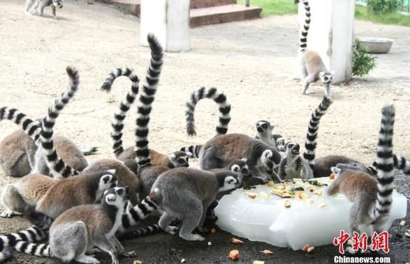 无锡动物防暑降温有妙招