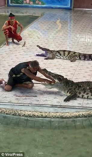 泰国驯兽师表演时被鳄鱼咬中(图)