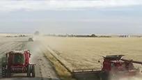 巴西这次惨了,百万吨大豆无处售,真是偷鸡不得舍把米啊