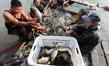 """渔民在""""采煤塌陷区""""捕鱼"""