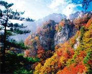 再过半个月 嵩县要大变了 最美的嵩县将惊艳全国