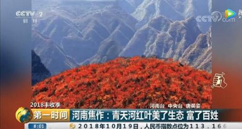 央视再次聚焦 青天河红叶到底有何魅力?