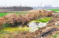 暗访西安周至临川寺村:东环城渠污水臭气熏天