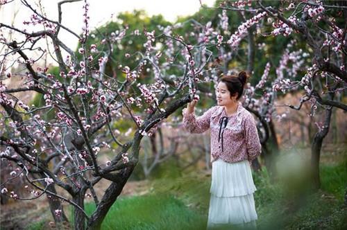 鲁山县林丰庄园石峡沟:200多亩杏树花蕾挂满枝头含苞绽放