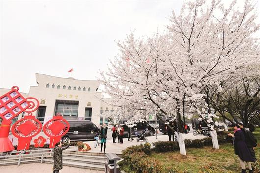 三月小学温如糯a小学樱花缀满江城春风埔东中心图片