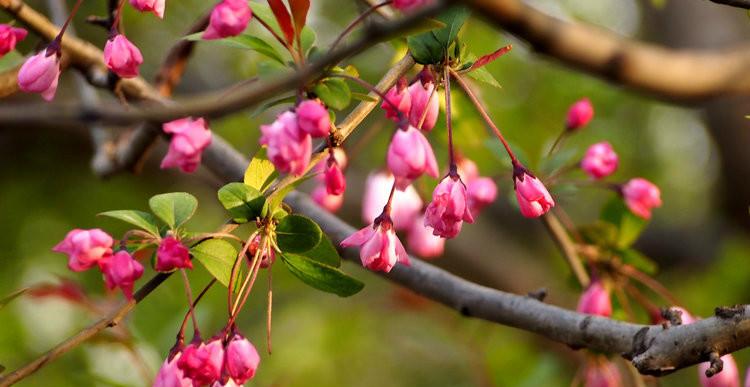 济南最柔美羞涩的花