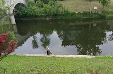 加强水源保护 西安黑臭水体近期整治目标已完成