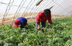 """建立联结机制 新型农业经营主体带着小农户""""一起飞"""""""