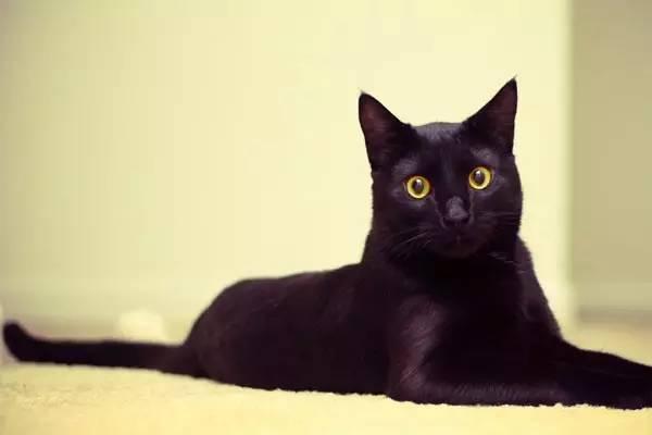 小长假的时候怎么让猫咪独自安全在家?