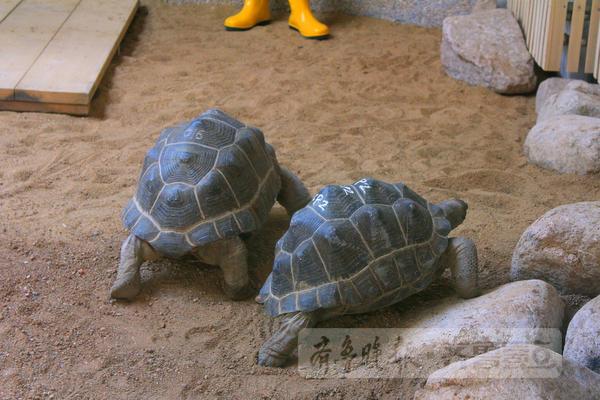 """青岛市动物园象龟馆开馆 欢迎毛里求斯""""友谊使者"""""""