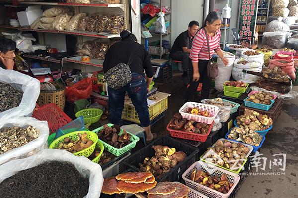 南华县野生菌交易市场火热