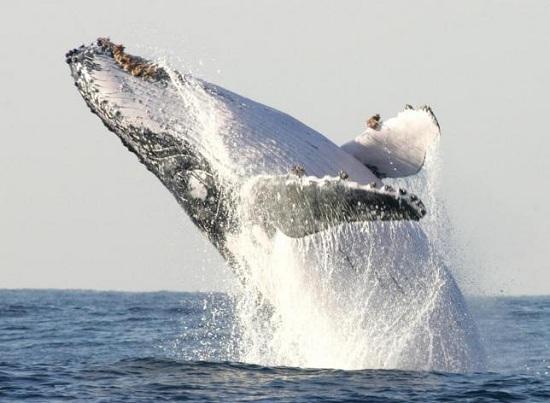 """竟然因为看错了方向而错过鲸鱼近距离""""华丽翻身""""的一"""