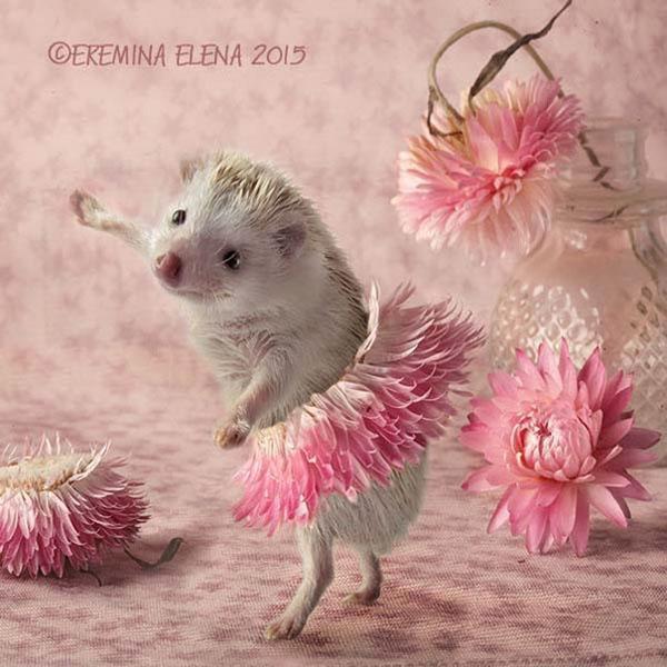 eremina擅长拍摄可爱的小动物