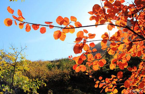九龙峡景区的红叶.图片来源于网络