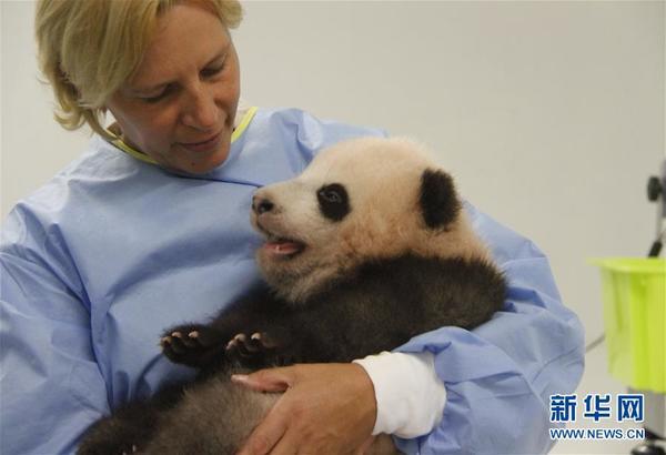 """_起名注意字音好听首只在比利时出生的熊猫宝宝取名""""天宝""""(高清组图"""
