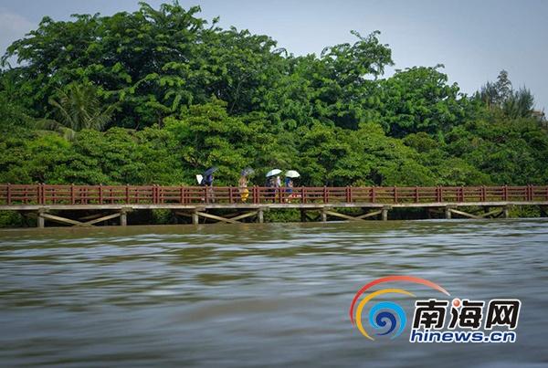 游客在东寨港红树林景区的栈道上观光游览