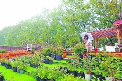 生自筹19万元打造 屋顶花园