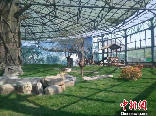 """图为熊猫姐妹的""""草原之家"""" 金泉 摄"""