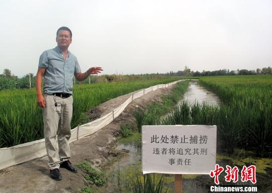 养殖户陈伟熙介绍,稻田养小龙虾,可以实现千斤稻百公斤小龙虾.