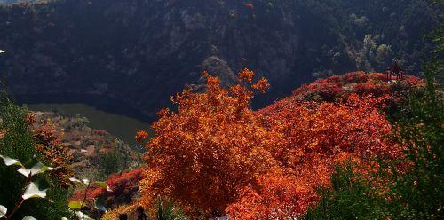 章丘垛庄红叶节开幕,满山红叶红似火