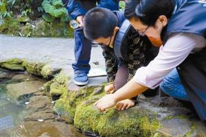 小朋友在仙湖植物园观看苔藓植物。