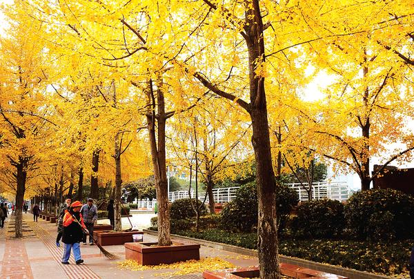 马路边的风景图