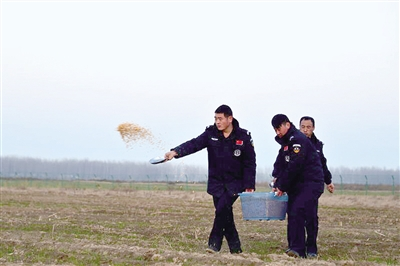郑州向黄河湿地撒3吨玉米 帮鸟儿平安过冬 (图)