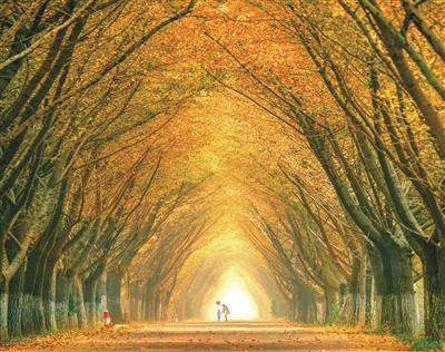 """而在银杏园西部,有邳州艾山景区;中部则是闻名遐迩的""""时光隧道"""""""