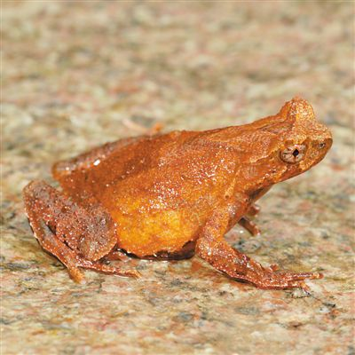 浙江发现两栖类动物新物种