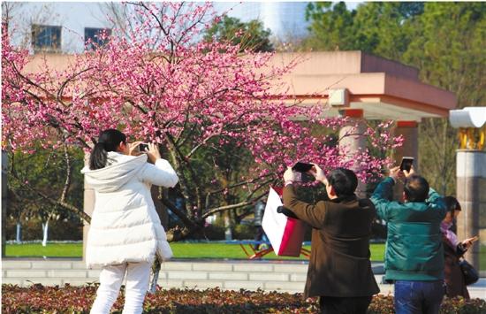 春天来了,千姿百态的梅花竞相开放
