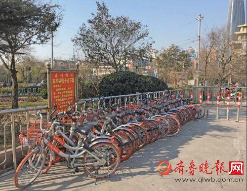 多辆单车被锁在一起.本报记者刘飞跃摄-乱停乱放,济南多辆摩拜单