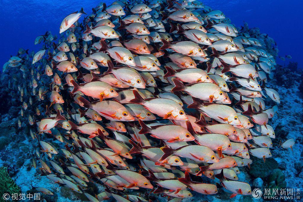 摄影师潜入深海拍摄鱼群高清图