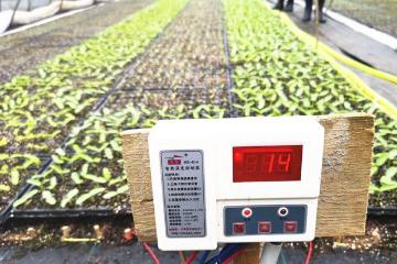 长沙连续低温阴雨致蔬菜基地减产 农技专家支招