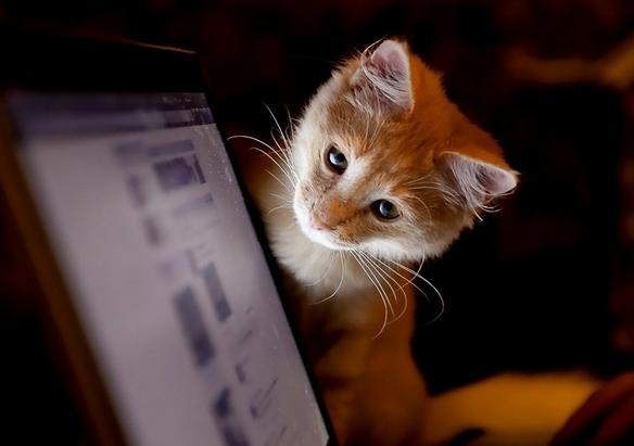 怎么给小猫喂奶 猫咪奶粉哪个牌子好