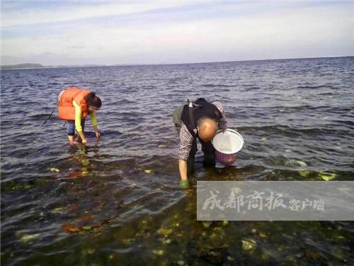 生蚝成灾丹麦大使馆求助中国吃货问是吃成珍稀还是濒危?