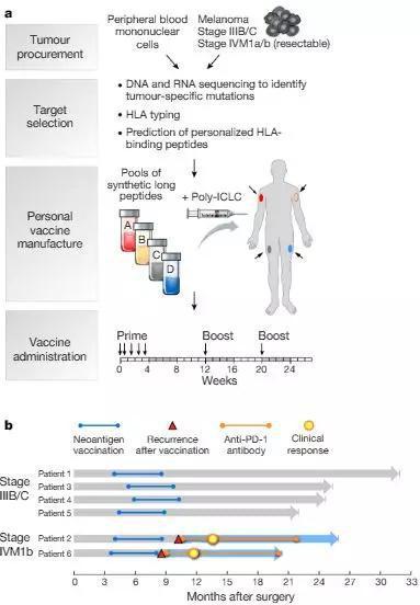为高危黑素瘤患者生成个性化新抗原癌症疫苗Wuet al。