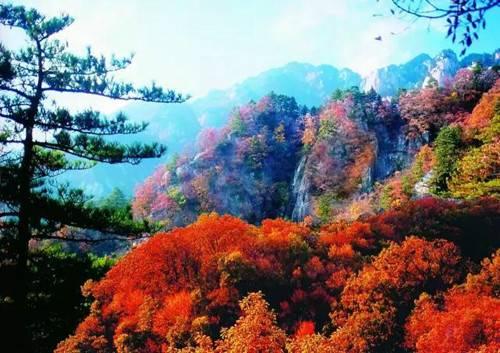 秋天趁嵩县这些景正美还免费快去看看吧