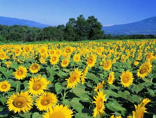 花开花美花如海金秋十月西九华山花千谷与你相约