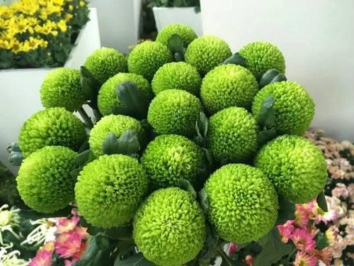 您的漂亮朋友——中国开封清明上河园国际菊展已上线