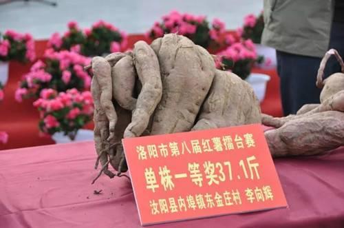 第八届红薯擂台赛暨农产品包装设计大赛颁奖典礼在汝阳县举行