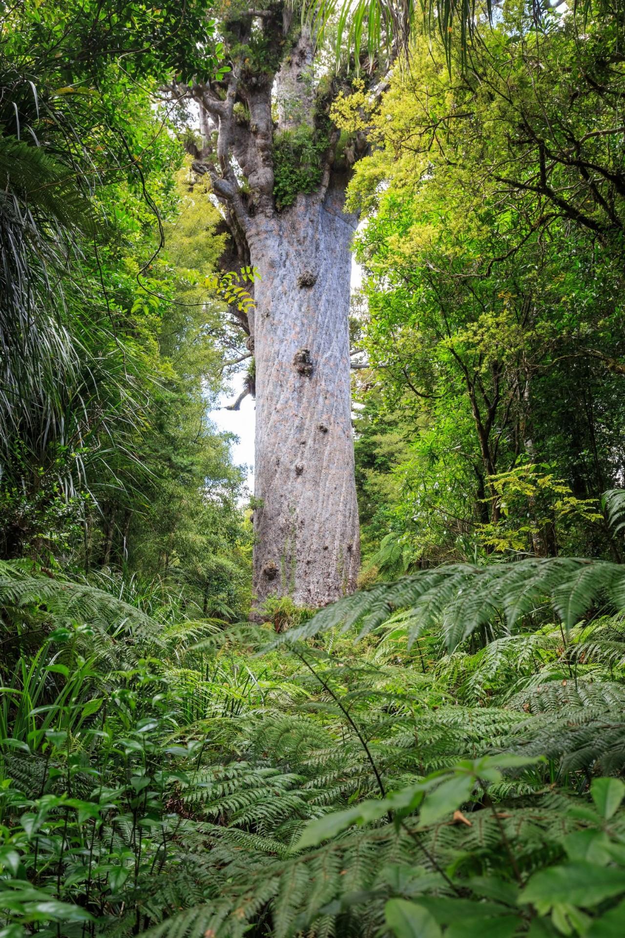 承包新西兰精华景点 这3条经典自驾路线推荐给你